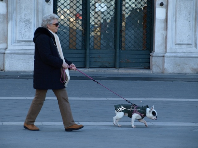 Cute dog taking its owner for a walk.