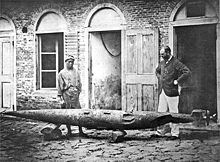 Robert Whitehead (right) and his son with a battered test torpedo, Rijeka circa 1875.