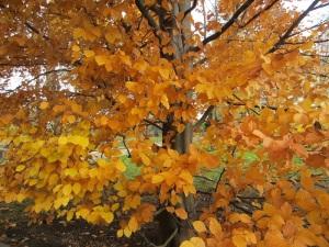 31 autumn leaves