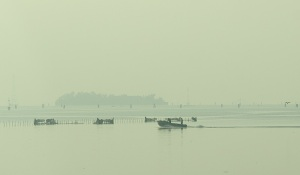Misty morning on the Venice estuary.