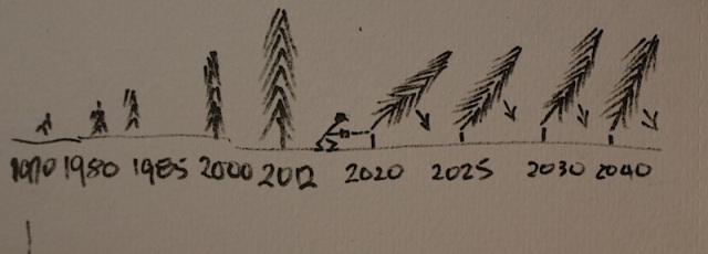 My communication sketch.  Josef can point to the dates of when the trees were planted to when they are to be cut down.