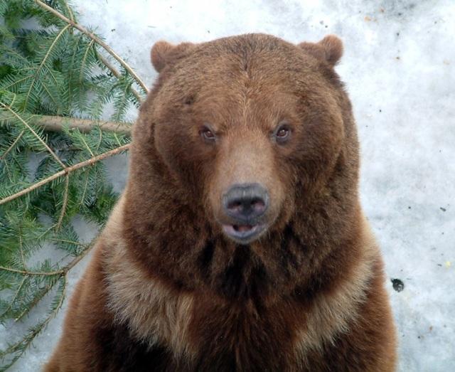 28 Bern bear