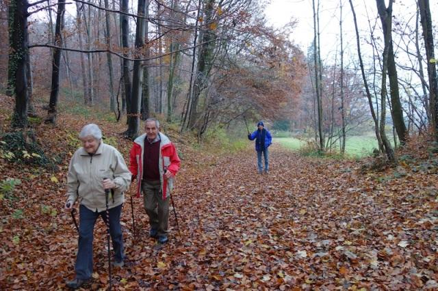 38 forest walk