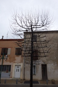 Front view of a manipulated tree.