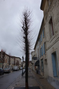 Side view of the same tree.