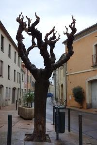 Heavily pollarded tree.