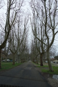 The French authorities revere their roadside trees.  In Australia trees this close to the road would be removed as a danger to motorists.