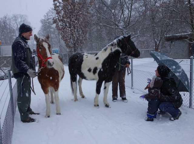 Meeting the horses in the animal park (Tierpark)