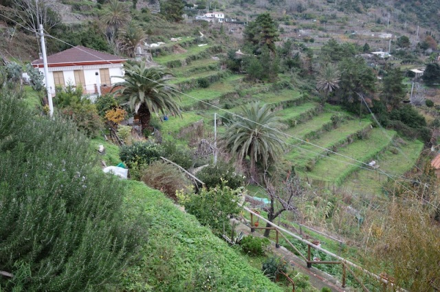 Terraced farming plots on the way to Corniglia village.