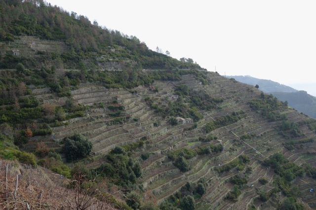 Terraced hillside.