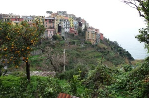 Corniglia from the walking trail. Citrus grows well on the hillsides.