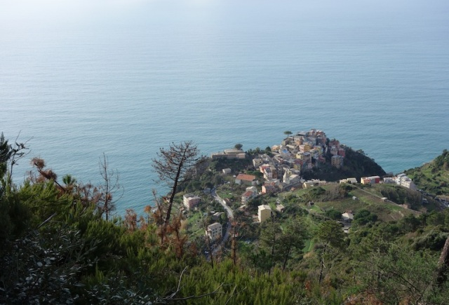 Looking back towards Corniglia. The railway station (the starting point for Bev's walk) is at sea level.