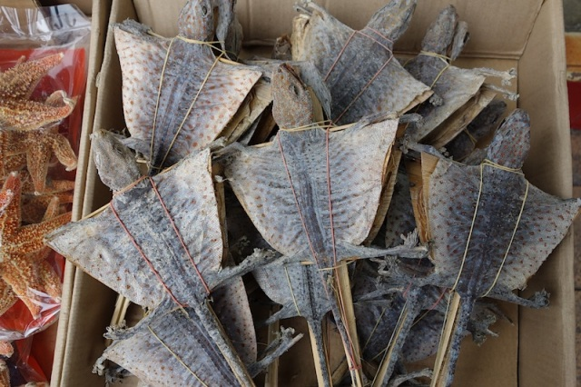 Dried flying lizards on sticks used in traditional medicine.