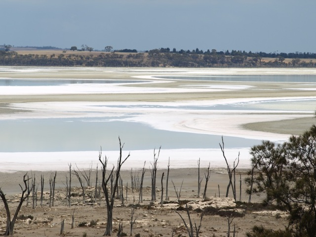 Salt meanderings of Dumbleyung Lake.