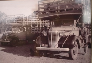 Chevrolet trucks on the road circa late 1930s early 1940s.