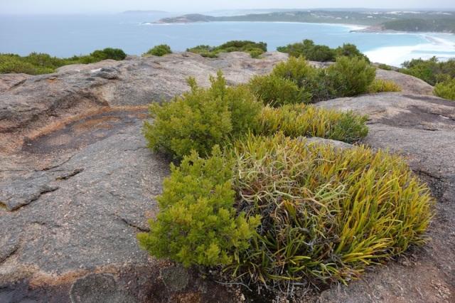 Coastal granite heath.