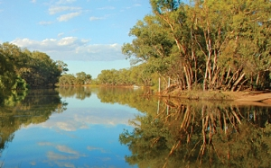 Bogan River at Nyngan. When the water is like this it is a very acceptable kayaking destination.