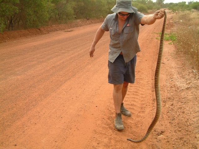 Tim getting to know the fauna near Numbulwar East Arnhem Land. The reason for this encounter was to move the snake off the road away from danger.