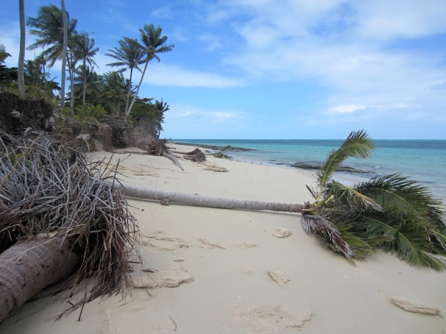 Coconut palms at the low end of Poruma.
