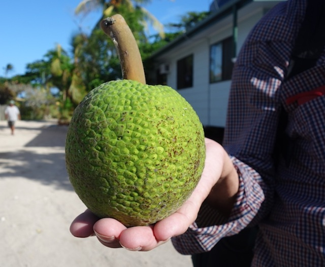 A new experience for me, coming in contact with a breadfruit.