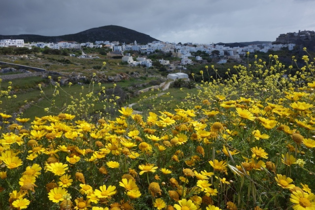 Wild daisies and Chora the capital of Kythera.