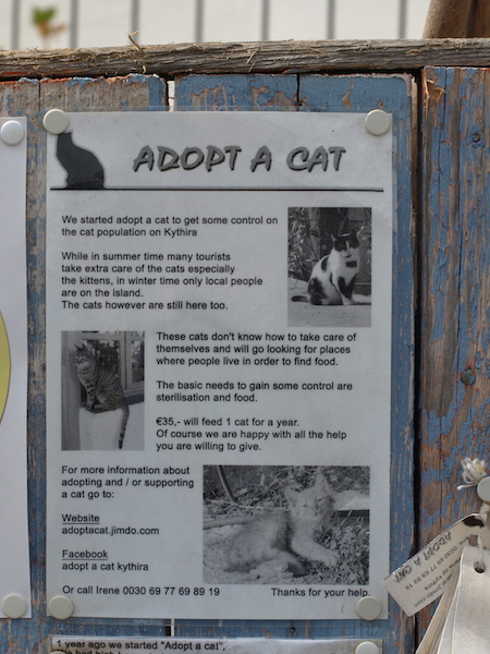 Adopt a Cat poster.