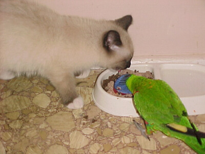 Cat and parrot mates.