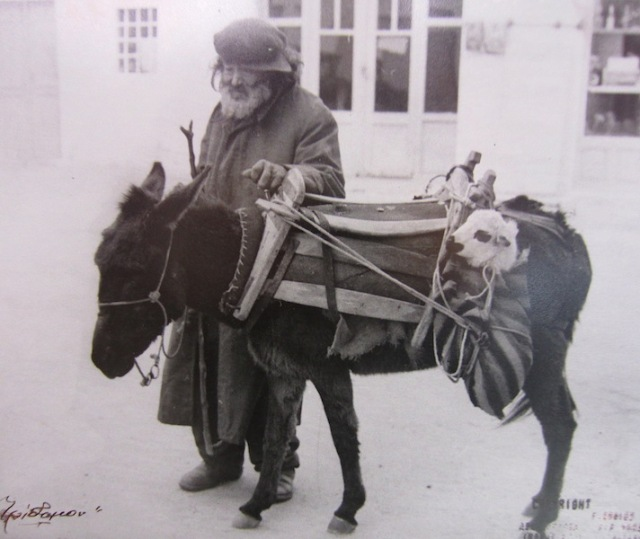 Affection. I doubt if this old gentleman would harm this donkey. Note the lamb in the sack tied to the donkey harness.