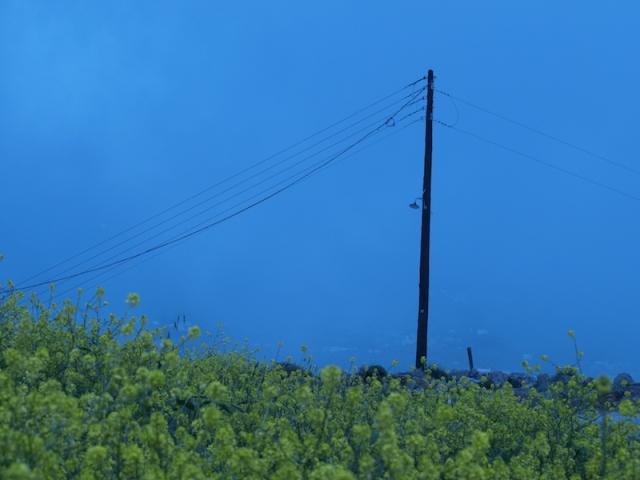 Misty blue power pole art.