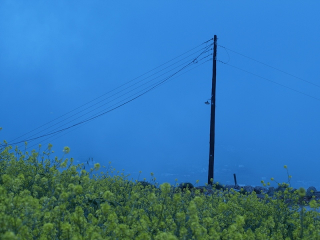 Misty blue power pole art.