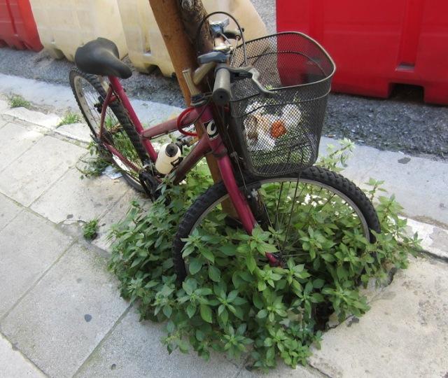 Abandoned bike rubbish bin.