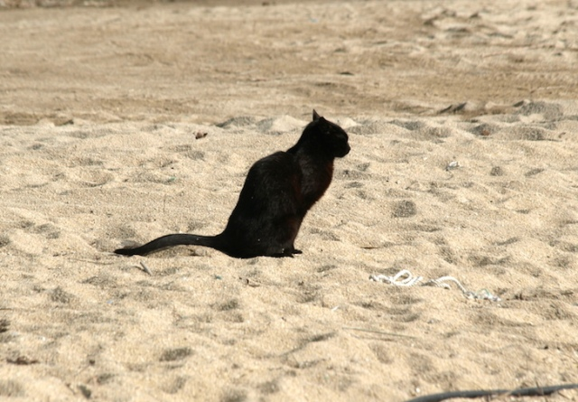 A cat on the job down on the beach nearby. It's a hack putting your elbow into a cat latrine on a beach.