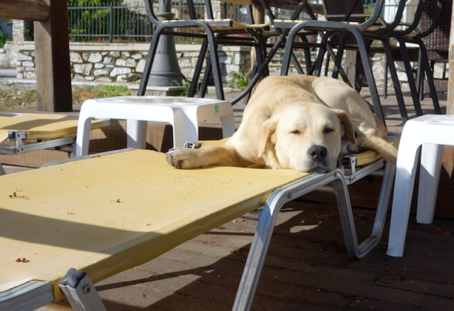 Local dog getting in some sleep on the tourists' deck chairs before they arrive.