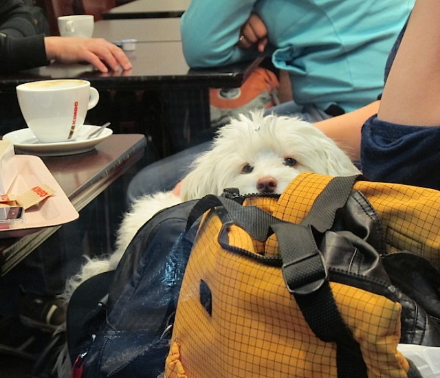 A toy dog in a bag.