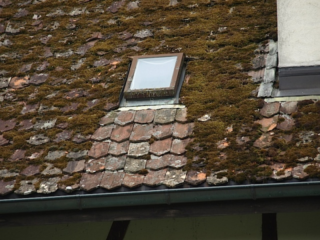 The flashing (weather seal) around the skylight is made from sheet copper and the verdigris from it is washing down the tile roof, killing lichens and mosses very effectively.