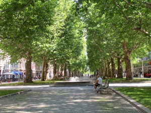 The beautiful London plane tree-lined boulevard down which we rode early this morning and where we must have acquired our punctures.