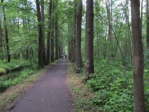 Bike path through the Spreewald.  There is a water drainage channel on either side of this path.
