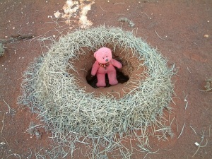 Tbear at the entrance to a Mulga ants' nest, western Queensland.