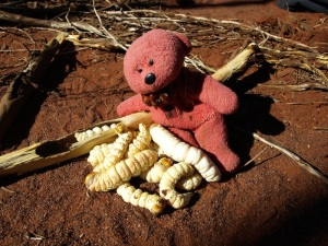 Tbear minding witchetty grubs, Central Australia.
