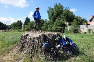 Giant oak stump.