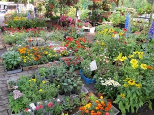 A few of the many flower stalls.