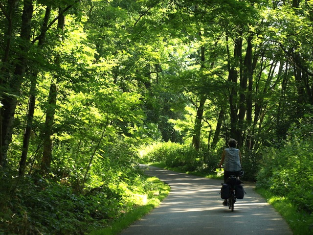 Early forest hues. It's impossible to describe the joy of riding through such a beautiful forest and on such a good surface, not sett-like at all.