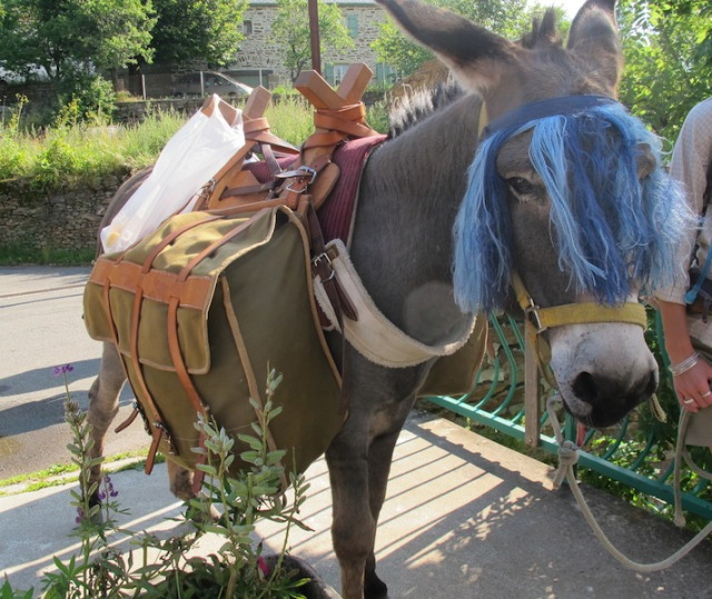 Donkey with packsaddle, equipped for the road.
