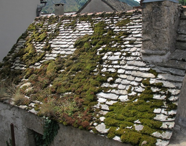 Botanical roof in the village of Le Pont de Montvert.