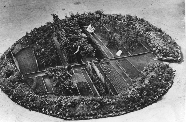 Victory Garden in a bomb crater. Image credit: National Archives and Records Administration Franklin D. Roosevelt Public Domain Library.