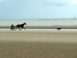A trotter and his dog passing along Utah Beach.
