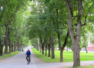 Riding an avenue in Uppsala.