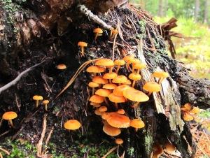 Fairy cluster. C/S8.