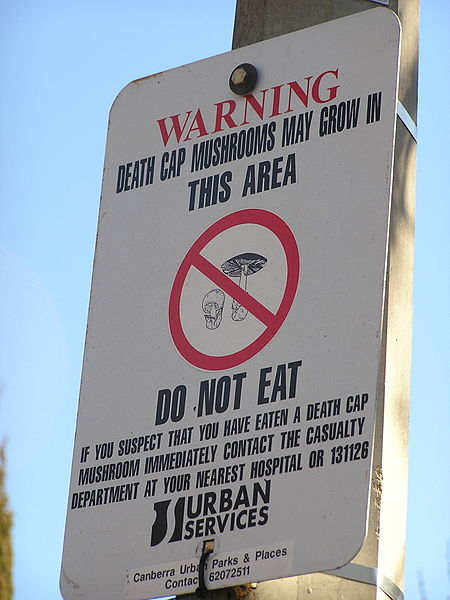 Death Cap warning sign, Canberra Australia. Image by AYArktos via Wikipedia.