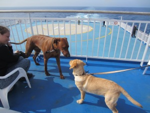 Dog meets dog on the dog deck.  The helicopter pad can be seen in the background.